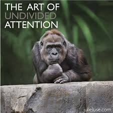 undivided attention gorilla